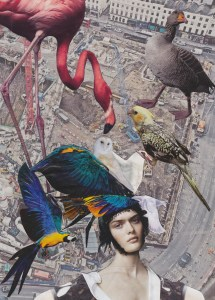 BIRDS, Emily Hill, Collage, 2014
